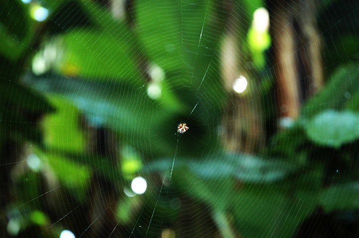tac spider